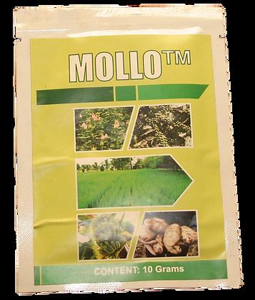 IMG Mollo.png