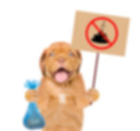 puppy holds plastic bag and sign _no dog