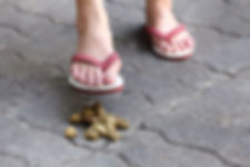 close-up on a woman foot step on a dog p