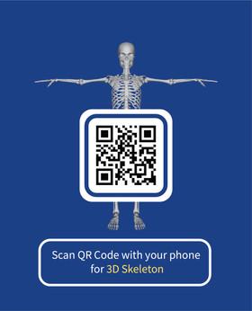 Study 3D Skeleton