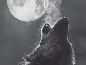 wolf moon | Kait Quinn @kaitquinnpoetry