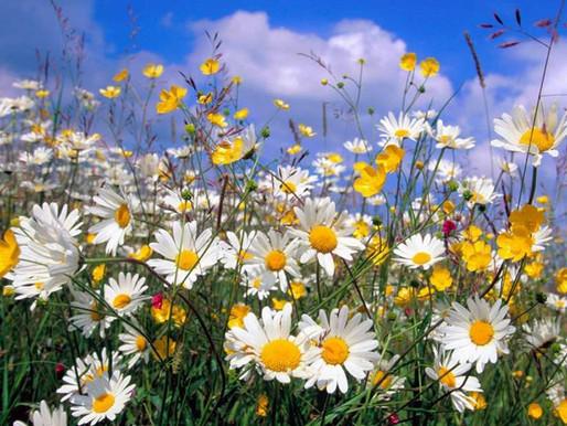 Campanha coma bem: Primavera