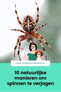 suusmaaktschoon.nl   suus maakt schoon   spinnen verjagen   spinnen bestrijden