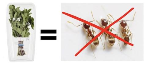 suusmaaktschoon.nl | suus maakt schoon | mieren bestrijden | mierenplaag | verse munt