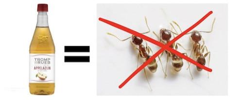 suusmaaktschoon.nl | suus maakt schoon | mieren bestrijden | mierenplaag | appelazijn tegen mieren