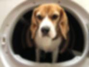 hond wassen, hondenshampoo.jpg