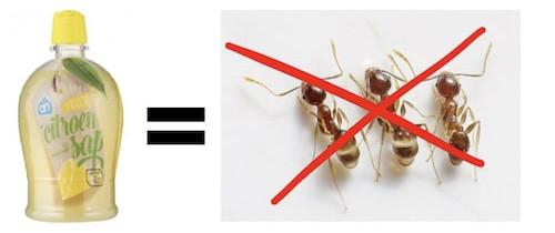 suusmaaktschoon.nl | suus maakt schoon | mieren bestrijden | mierenplaag | citroen