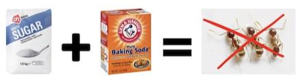 suusmaaktschoon.nl | suus maakt schoon | mieren bestrijden | mierenplaag | suiker en baking soda tegen mieren