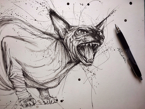 The angry sphynx