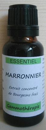 Extrait macérât mère concentré de bourgeons Marronnier d'inde (Haesculus hippocastanum) Gemmothérapie biologique marronnier