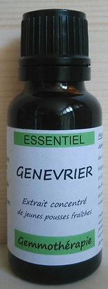 Extrait macérât mère concentré de bourgeons de Genévrier du Quercy(Juniperus communis) Gemmothérapie biologique genévrier bio