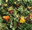 tisane biologique infusion plante sèche artisanal phytothérapie santé naturelle bien être