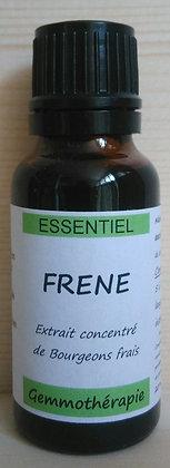 Extrait macérât mère concentré de bourgeons Frêne (Fraxinus excelsior) Gemmothérapie biologique frêne gemmo bio frêne
