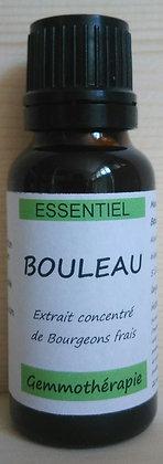 Extrait macrérât mère concentré bourgeons bouleau (Betula pubescens) gemmothérapie biologique bouleau gemmo bio bouleau
