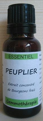 Extrait macérât mère concentré de bourgeons Peuplier (Populus nigra) Gemmothérapie biologique peuplier gemmo bio peuplier
