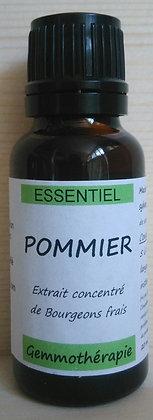 Extrait macérât mère concentré de bourgeons Pommier (Malus sylvestris) Gemmothérapie biologique pommier gemmo bio pommier
