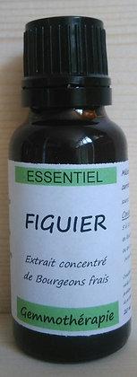 Extrait macérât mère concentré de bourgeons Figuier (Ficus carira) Gemmothérapie biologique figuier gemmo bio figuier
