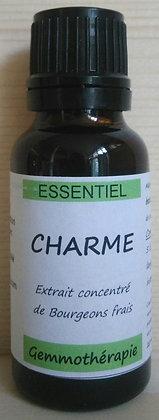 Extrait macrérât mère concentré bourgeons charme (Carpinus) gemmothérapie biologique charme gemmo bio charme