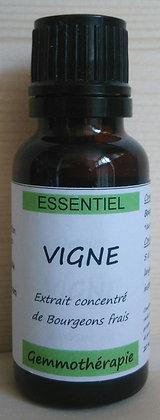 Extrait macérât mère concentré de bourgeons frais de vigne biologique Gemmothérapie biologique vigne gemmo bio vigne