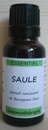 Extrait macérât mère concentré de bourgeons Saule (Salix alba) Gemmothérapie biologique Saule gemmo bio saule