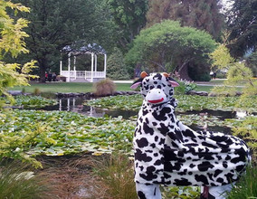 cow in the park.jpg