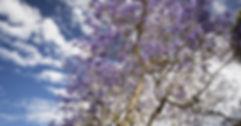 shutterstock_544018150.jpg