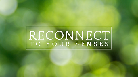 Reconnect to your senses workshop
