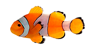 clown-fish.png