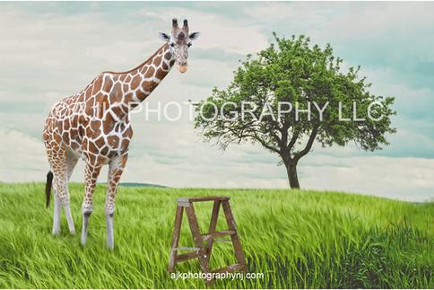 giraffe in field after thumbnail.jpg