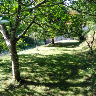 Walnut and Apple trees on the terrace