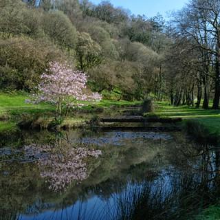 Magnolia on the lake