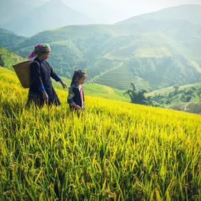 Asia : A Modern Landscape