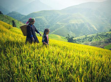Les raisons d'investir au Vietnam