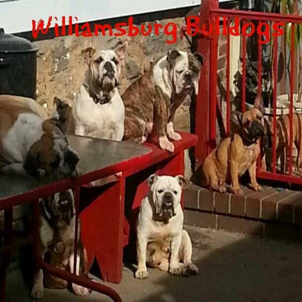williamsburg bulldogs bench.jpg