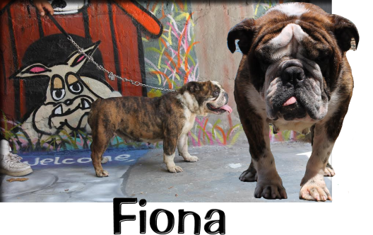 Fiona 5.5.png