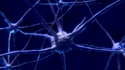 An Introduction to Neuroplasticity