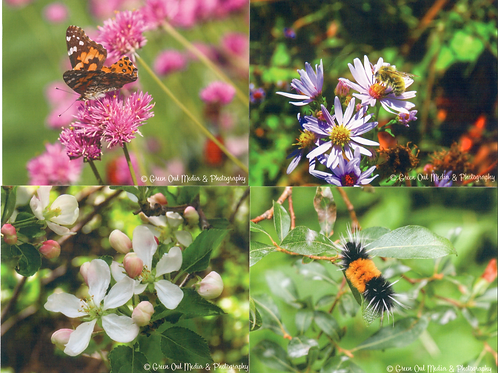 Black Hills Bugs & Flowers Notecards