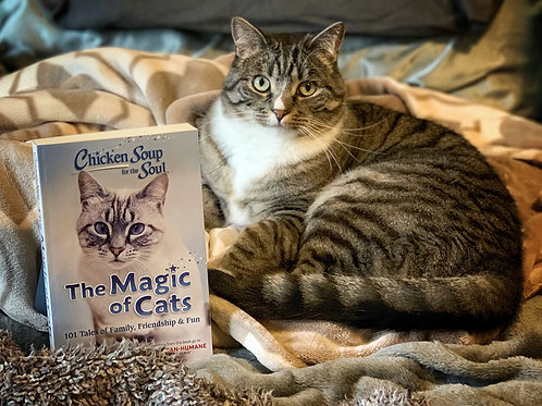 The Magic of Cats