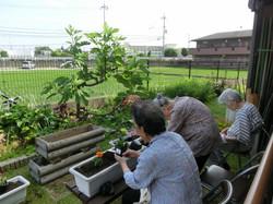 お庭で園芸活動