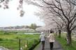 満開の桜を楽しみました