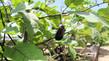 夏到来 野菜豊作