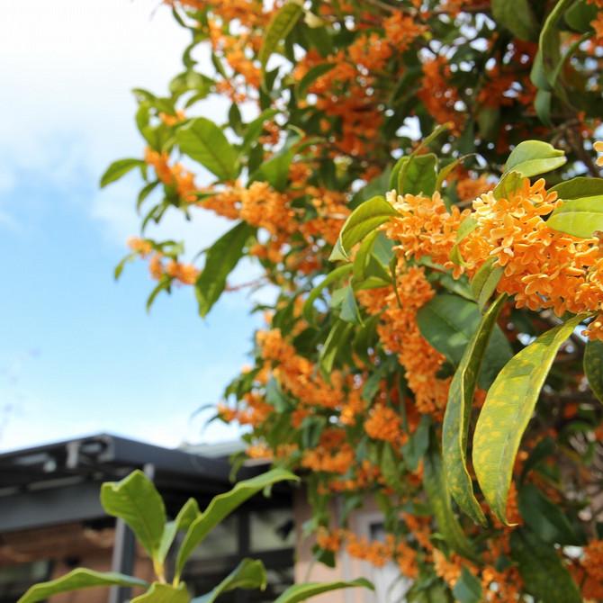 季節の香りを楽しみました