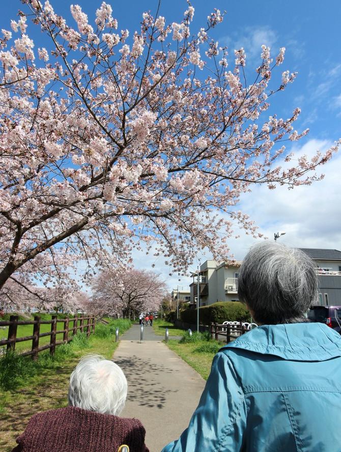 桜並木をゆっくりお散歩