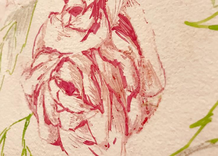 Maldives's National Flower: Rose