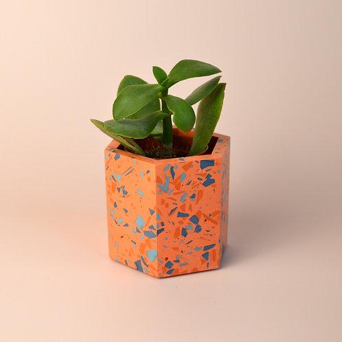 Terrazzo coral plant pot