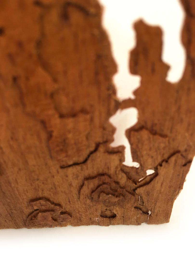 Olympia, WA Detail