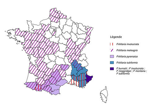 carte-Fritllaria-France.jpeg