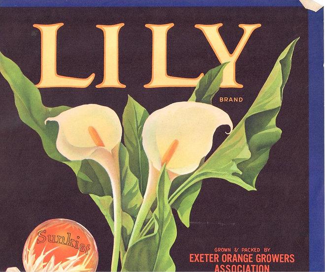 Vintage Lily Brand Exeter, CA Fruit Label