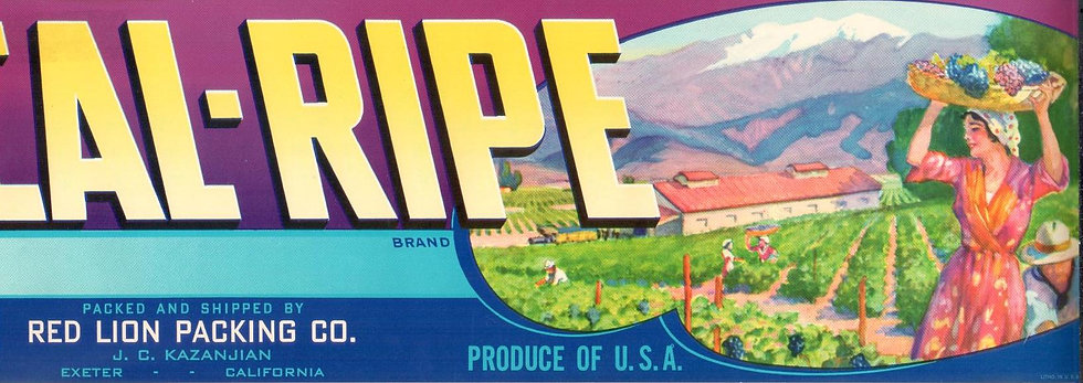 Vintage Cal-Ripe Exeter, CA Fruit Can Label