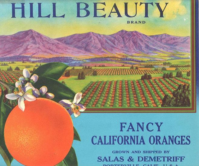 Vintage Hill Beauty Brand Oranges Porterville, CA Fruit Label